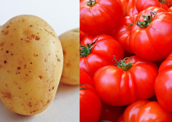 potato-tomato-lifestylica