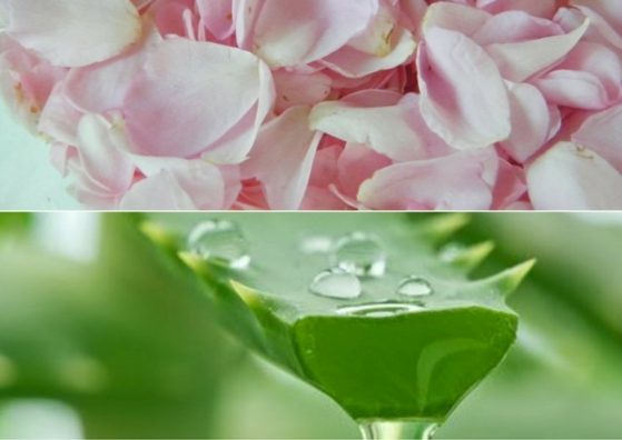 How to use rose water for hair - aloe vera mask