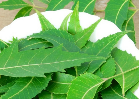 Neem Face Packs for Great Skin - Leaves