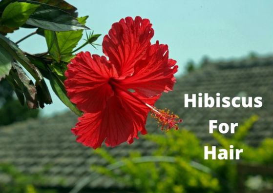 hibiscus-for-hair-flower