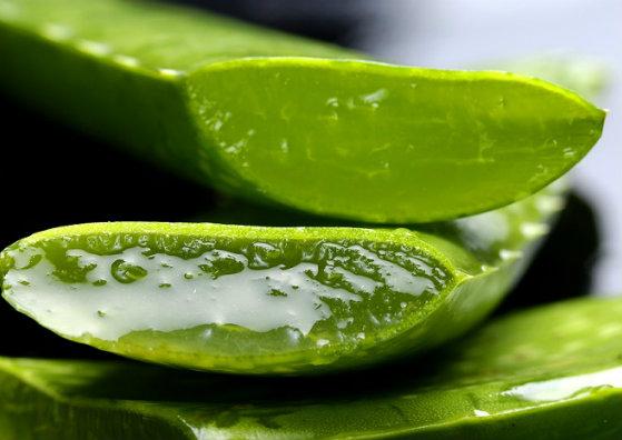 Beauty Tips for Oily Skin - Aloe Vera Gel