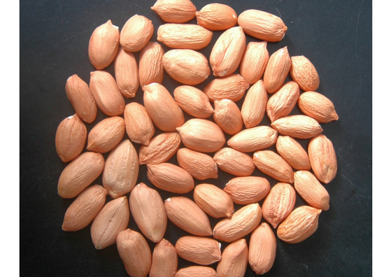 groundnut-health
