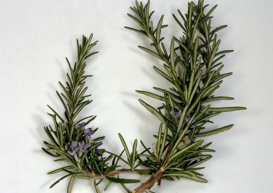rosemary-oil-benefits-lifestylica (3)