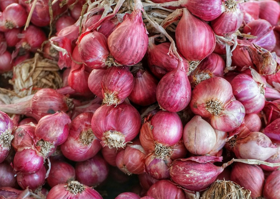 onion for hair growth-lifestylica