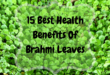 Brahmi benefits - lifestylica